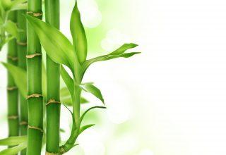 Linia bambusowa antyalergiczna